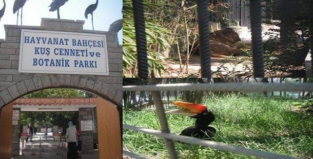 Kocaeli Darıca Hayvanat Bahçesi