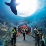 Dubai Akvaryum, Sualtı Bahçesi&Buz Pateni Tam Gün Turu